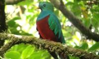 Central America 395 (2)