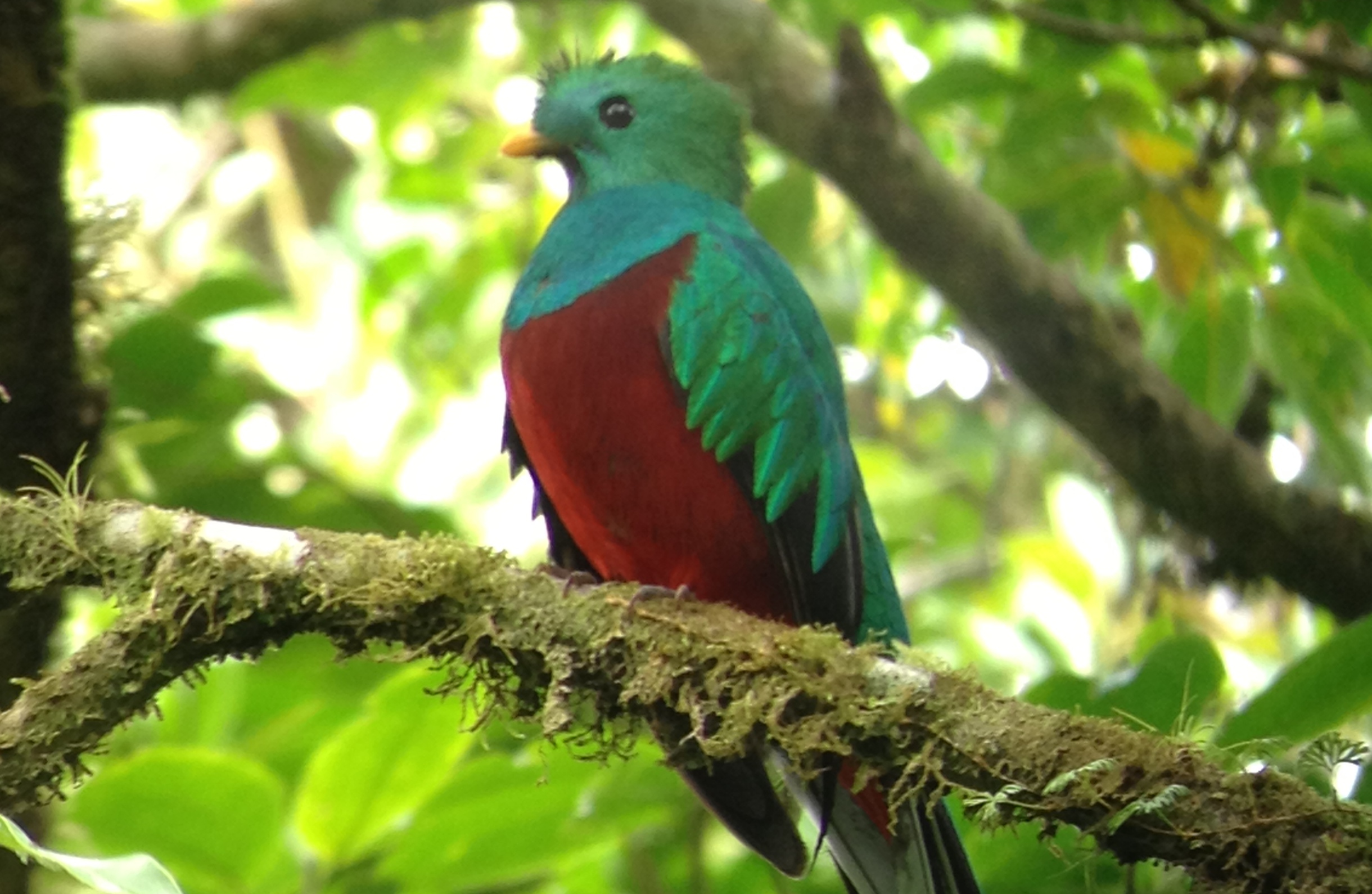 A twitcher for a day in Costa Rica