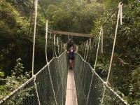 Conquering the canopy walkway at Taman Negara