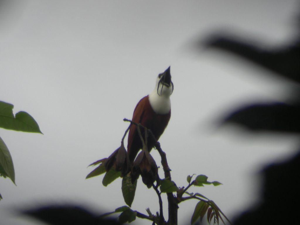 Central America 094