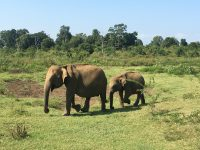 Up close with the Udawalawe elephants