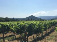 An unforgettable day in the Provence vineyards